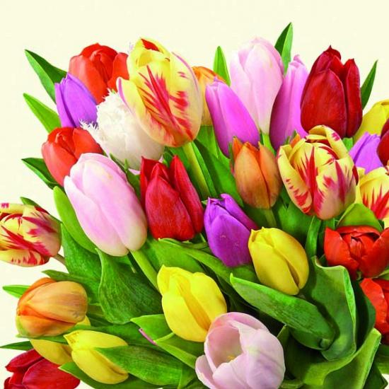 60x Papieren servetten bloemen print tulpen Multi