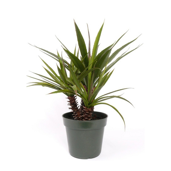 aloe vera in pot 71 cm fun en feest. Black Bedroom Furniture Sets. Home Design Ideas