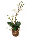 Witte orchidee 32 cm