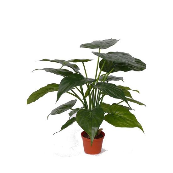 Alocasia kamerplant 51 cm